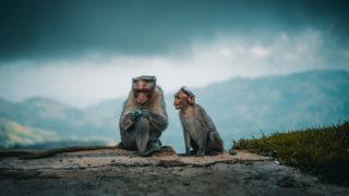旅猿のHulu(フールー)での配信状況は?各シーズンとスペシャル番組の配信状況まとめ